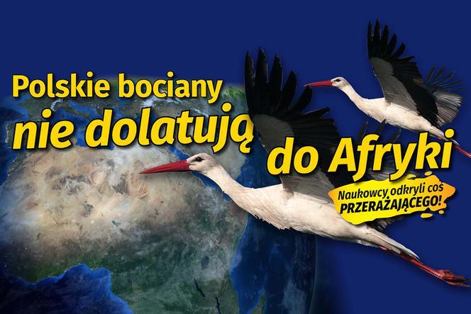 gf-E5K6-zax9-2NGc_polskie-bociany-nie-dolatuja-do-afryki-664x442-nocrop